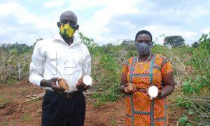 farmers in cassava field
